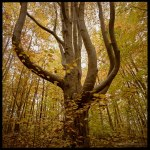 Tree Tuesday 121120