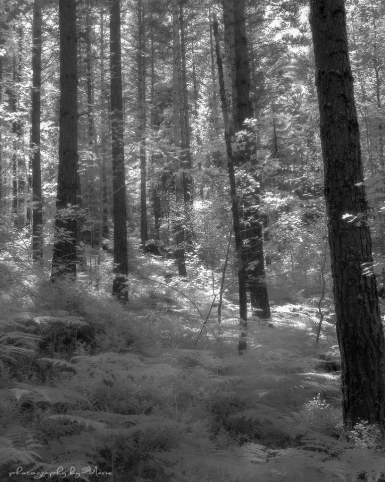 Wista 45DX field camera Efke IR 820 Kodak Tmax dev 1:4