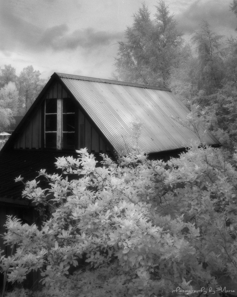 Garden shed in IR on an overcast day