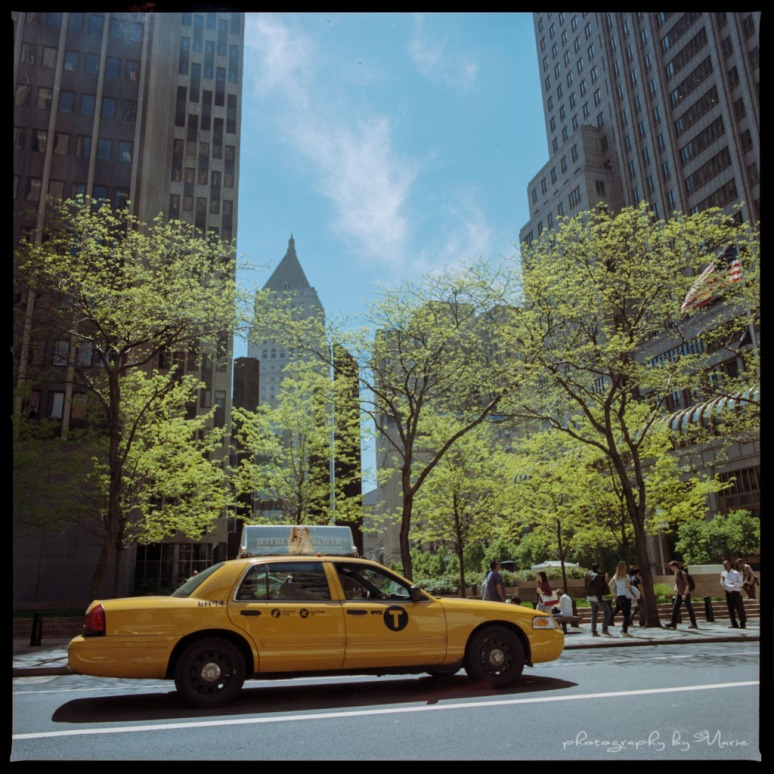 Hasselblad 503 CX Kodak Portra 400