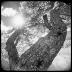 IR in strong backlight–2