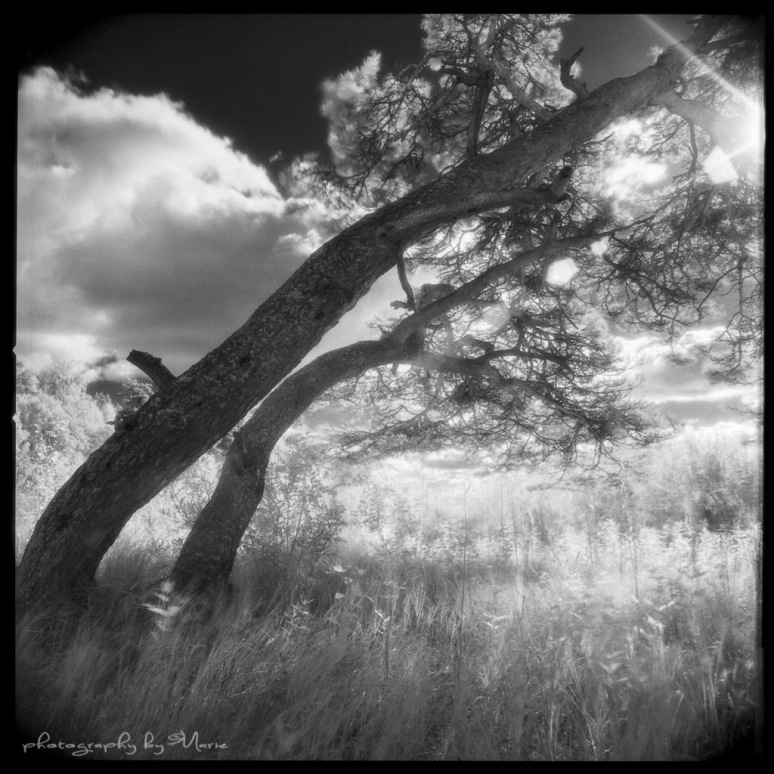 Hasselblad 503CX + Distagon 50mm/f4 Efke IR820 + IR720 filter @ISO 3 Kodak T-max dev 1:4