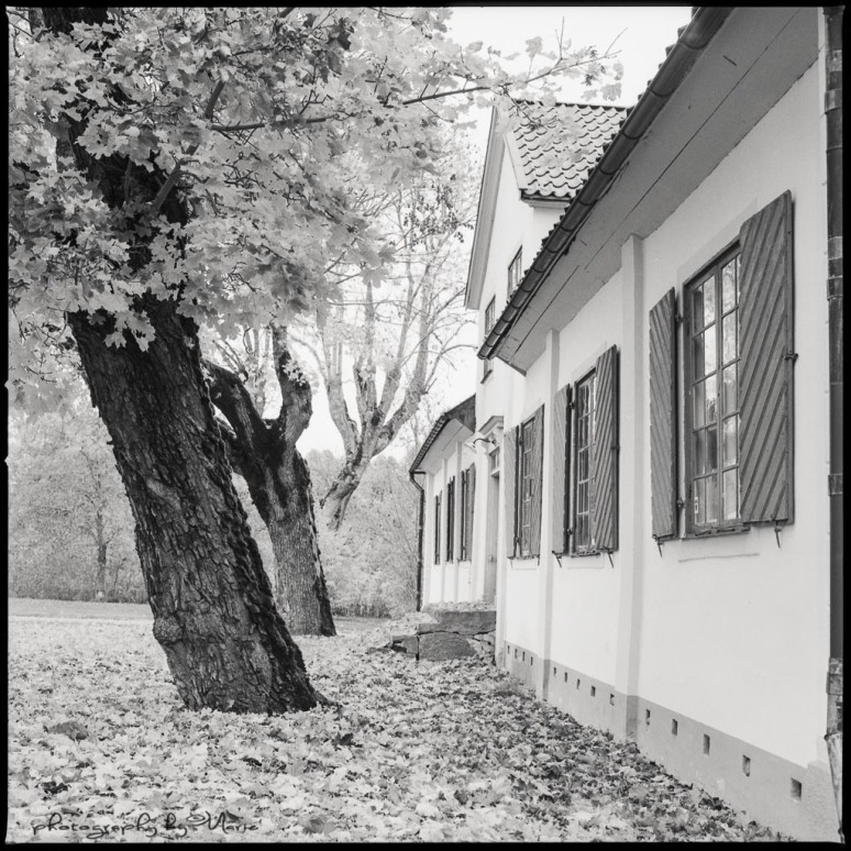Hasselblad 503CX Ilford FP4+ Developed in FX 39 1:9