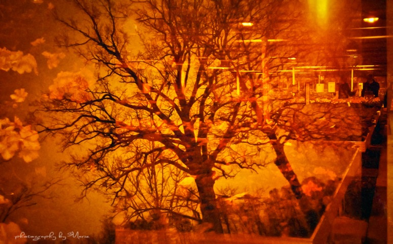 Lomo LC-A+ Lomography Redscale XR 50-200 Developed at home in Tetenal Colortec C41