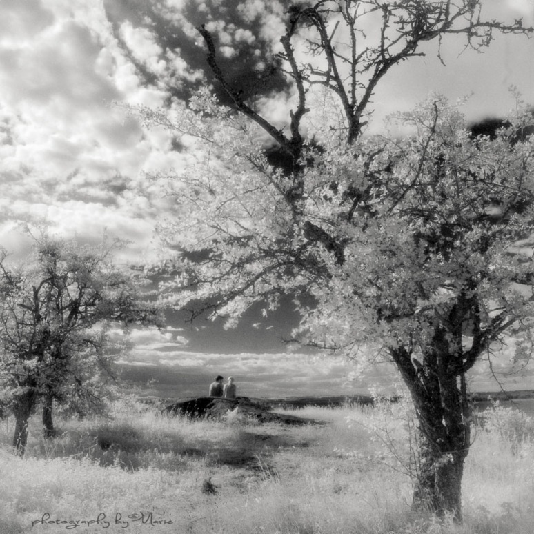 Hasselblad 503CX + Distagon 4/50 Efke IR + IR 720 filter Developed in Ilfotec DD-X 1:4